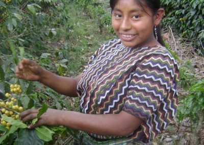 Wendy cutting coffee in the Finca Pampojilá, but before the Torment Agatha. However, we call the yellow variety she picks Nancy for its resemblance to the fruit of that name.