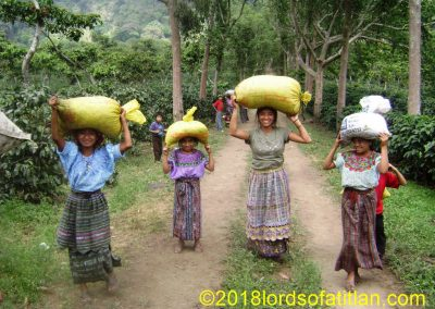 Carrying coffee to the processing floor, Pampojilá,