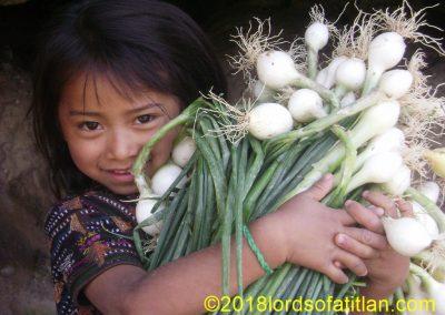 Onion harvest, Panajachel