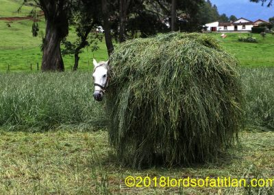 Horse carrying hay or hiding behind hay stack in Acul, Nebáj.