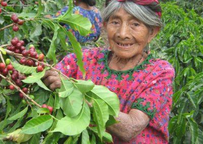 Juana Choac picking coffee in the Finca Pampojilá, but Juana is now deceased.