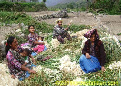 Family from Tierra Linda, onion harvest, Panajachel                                           Panajachel