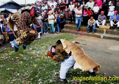 The traditional Dance of the Deer includes many classes of animals and husband and wife hunters. Only the Tiger and several deer dance in Patzún's Dance of the Deer, however, They call him Tigre, but he is actually a jaguar, and wears a genuine jaguar pelt. Likewise, the deer wear deer hides.